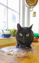 Cat feeding in Arundel Feline Divine Cat Grooming