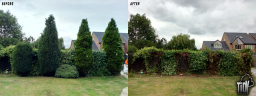 Conifer Removals in Long Eaton