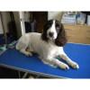 Maude & Eddie's Dog Grooming