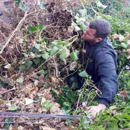 Ivy Removal in Surrey
