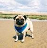 Hastings Pet Care