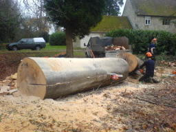 Making a bench out of a felled Beech tree