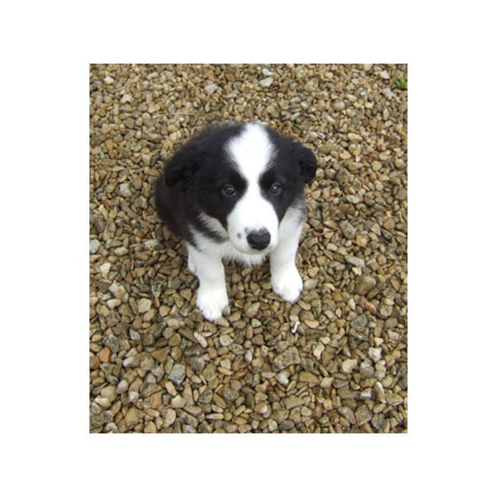 Safe Dog Kennels Swindon