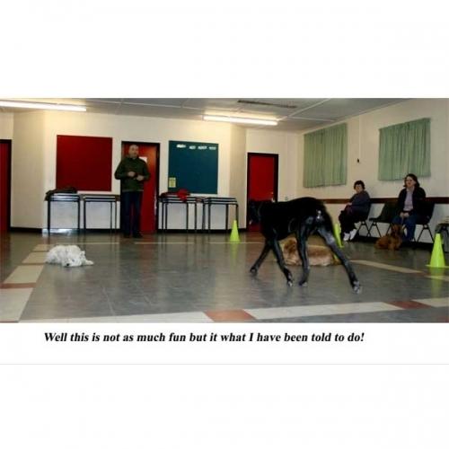 Dog Training Classes Salford