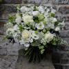 Kensington Flowers