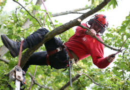 Tree Pruning - Connick Tree Care