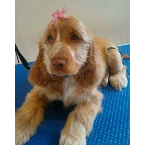Dog Grooming Courses North West