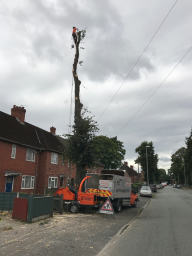 Lime Tree Removal Road Side