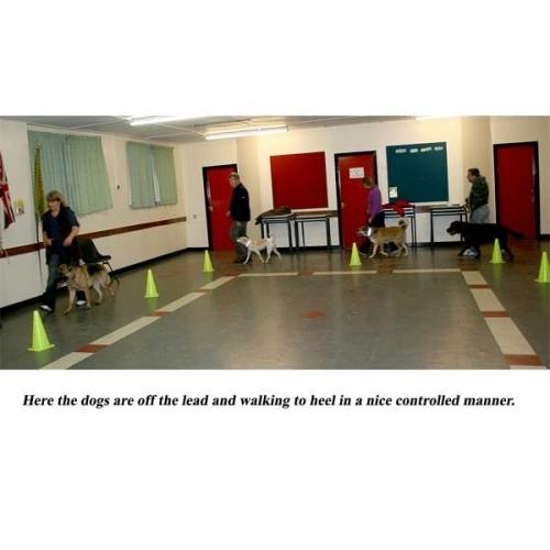 Dog Training Salford