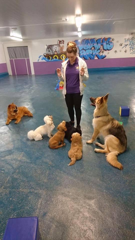 Noah S Ark Dog Day School Hull