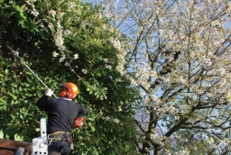 Tree Felling Services in Swindon, Wiltshire