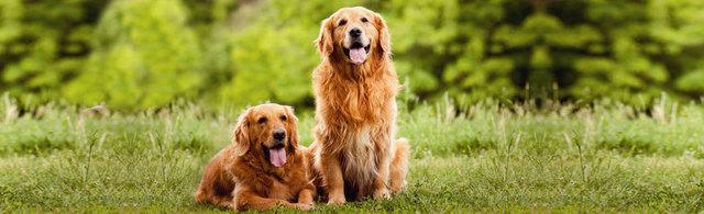 Top Dog Kennels Bristol