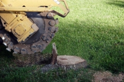 Jenks Stump Grinding Removal1
