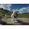 Brighton Dog Adventures