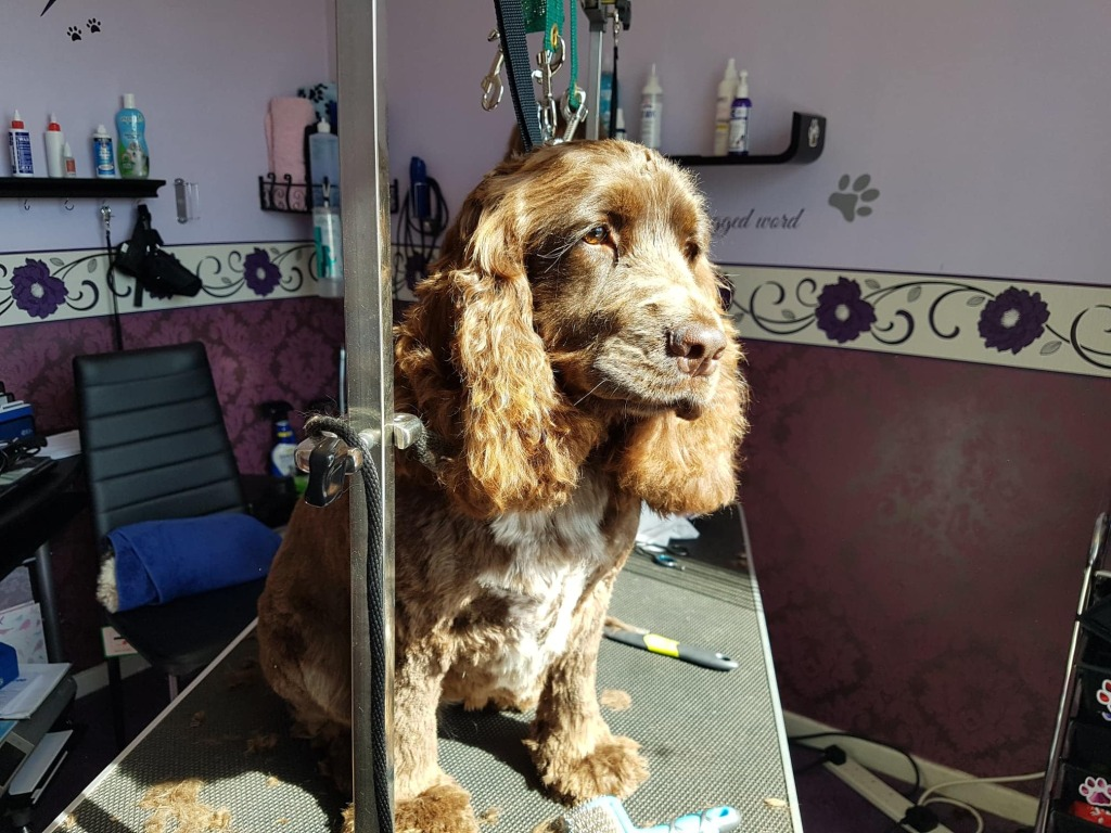 Dog Grooming Newcastl Upon Tyne