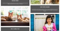 Feline Divine Grooming - Arun Vets trusted busines