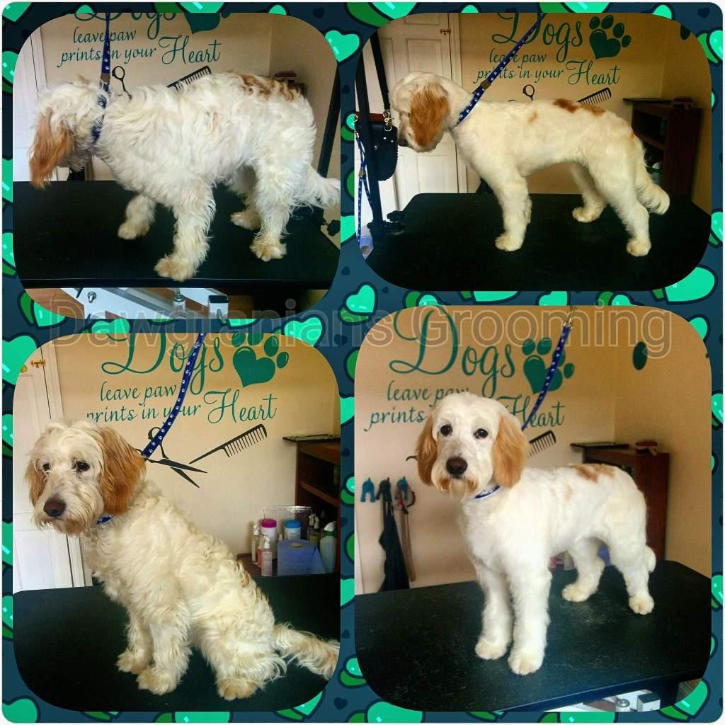 Mobile Dog Grooming Nottingham