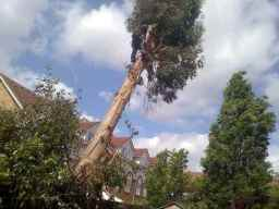Emergency Tree Work in Surrey