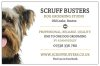 Scruff Busters Dog Grooming