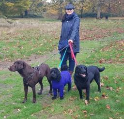 Maximum of 3 dogs per handler
