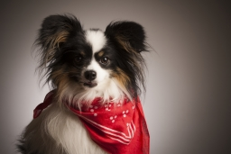 pet-photography-leicester-zigzag-studio