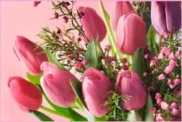 Tulips Delivered