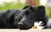Trusted Friends Pet Funeral Services Ltd