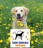 Canine Adventures Dog Walking