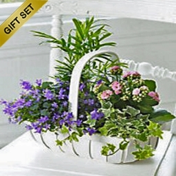 Florists Chooice Planted Basket Gift Set