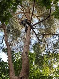 Tree Surgeon Reigate