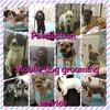 Pawfection mobile dog grooming service