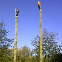 Poplar dismantling