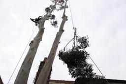 Lowering logs by rope