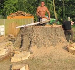 Tree Surgeons Reigate