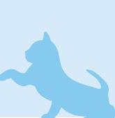 Bg Cat