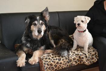 Top Dog Kennels Bristol Review