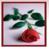 Brig's Flowers