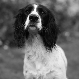 Dog, Pets, Family, Children, Family, Photography, Portrait, Photographer, Hemel Hempstead, Aylesbury