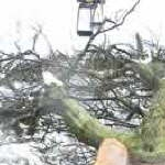 Tree Surgery Inverness Jpg