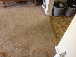 Kensington carpet cleaning services