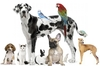 All Pets At Peace Individual Pet Cremations