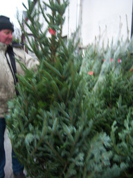 We Sell Christmas Trees