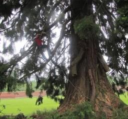 Tree Surgeons Dorking