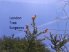 LondonTreeSurgeons - Haringey & North London