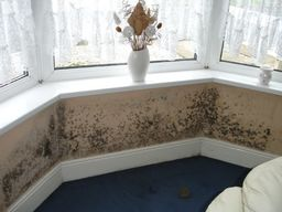 Mould to bay window