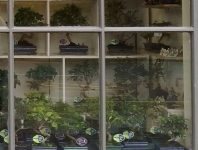 The Bonsai Shop Window