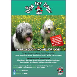 Happy Holiday Homes for Dogs!