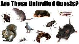 Getting Rid Of Moths Getting Rid Of Mice Getting Rid Of Bed Bugs Getting Rid Of Rats Getting Rid Of Wasps Getting Rid Of Cockraoches