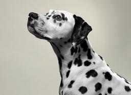 free pet portrait