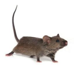 Mouse Control Glasgow